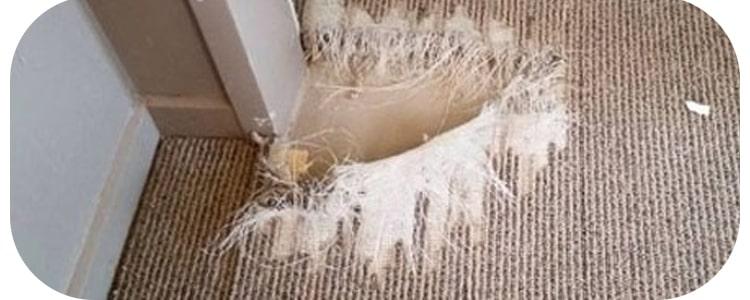 Best Carpet Repair  Peppermint Grove